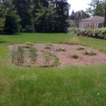 Sad looking garden